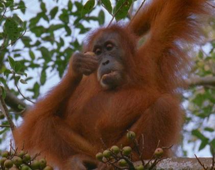 它与猴子最大不同的地方就是没有尾巴