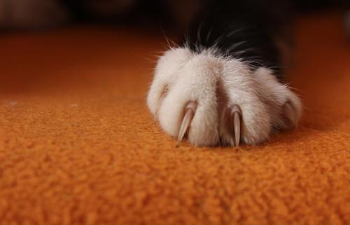 小猫舔爪子头像可爱
