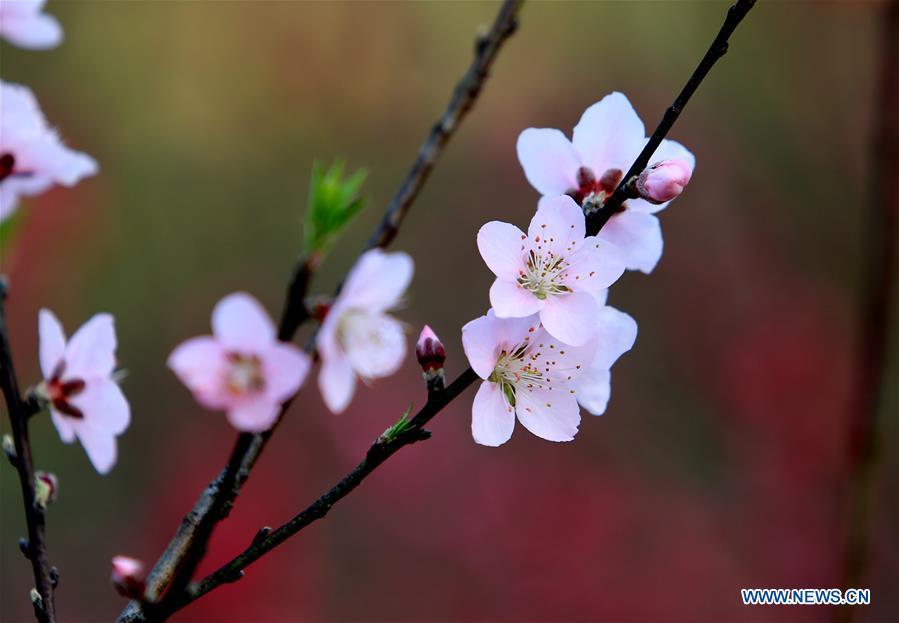 EN IMAGES: Beaux paysages au début du printemps en Chine