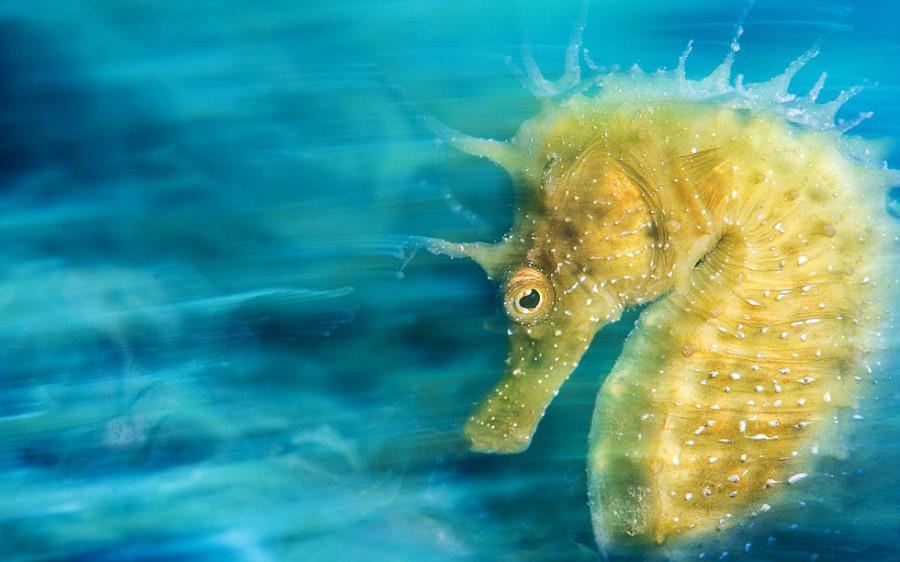 Les meilleures photos du concours 2016 Underwater Photographer