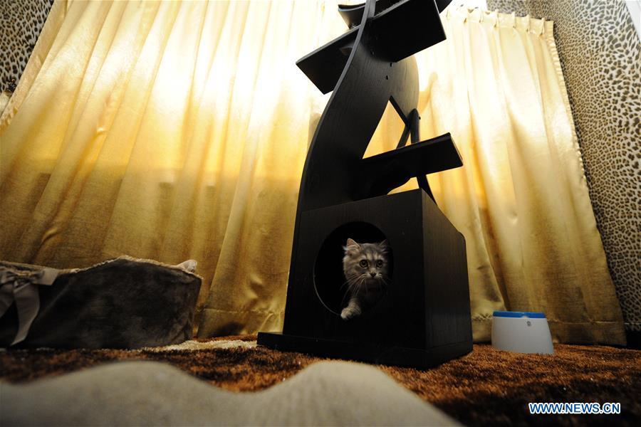 """""""The Wagington"""", un hôtel 5 étoiles pour les chats"""