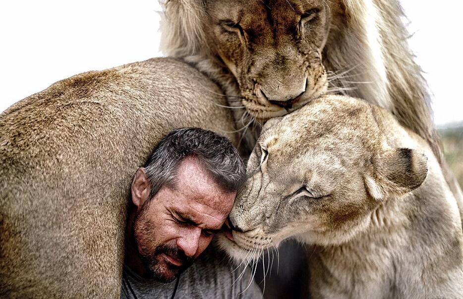 理查德森与这头非洲狮生活在南非比利陀利亚野生动物