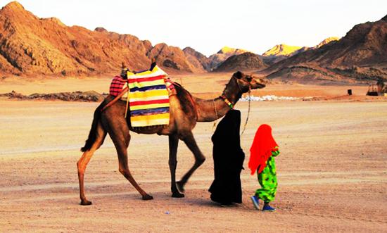 Le désert du Sahara (Algérie)
