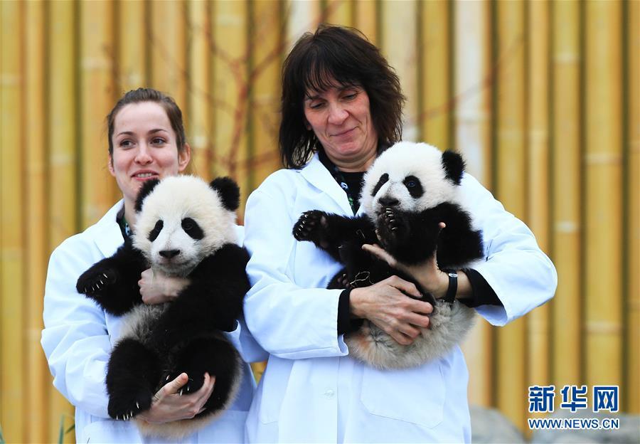 Le PM chinois se félicite du baptême de pandas jumeaux au zoo de Toronto