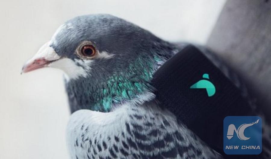 Les pigeons se chargent désormais de surveiller la qualité de l