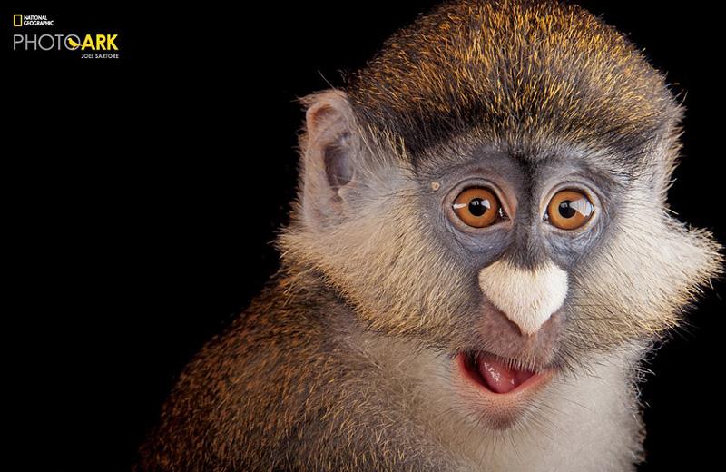 Un photographe a décidé de photographier 12 000 espèces animales avant leur extinction