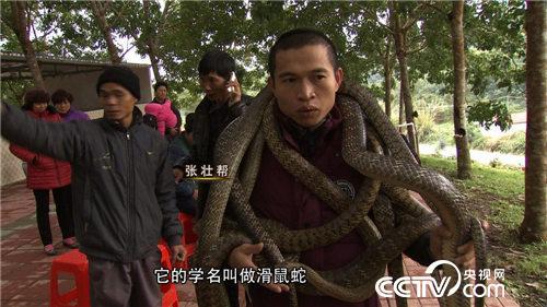 致富经:胆小小伙养蛇记