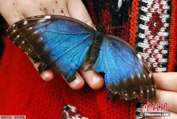 En image: Exposition de papillons au Musée d