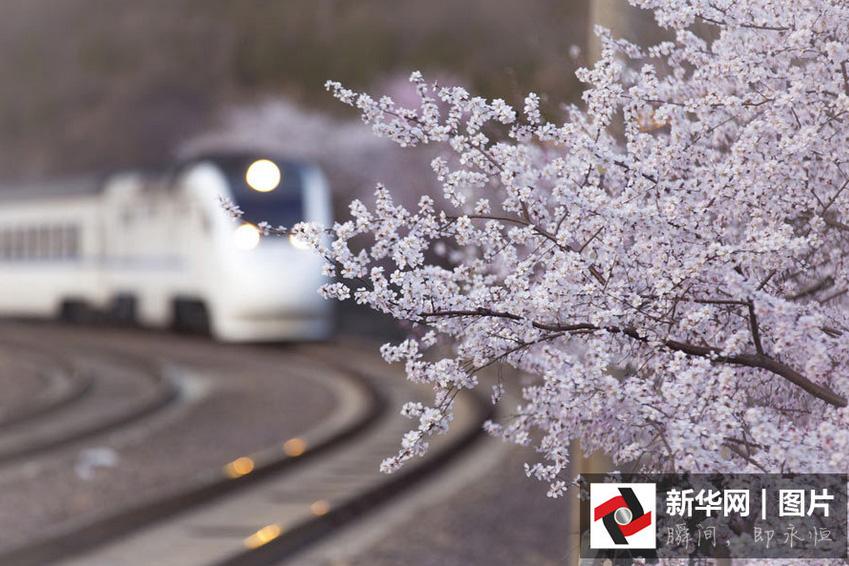 Mer de fleurs éblouissantes à Beijing