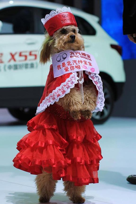 Un chien mannequin au 25ème Salon d