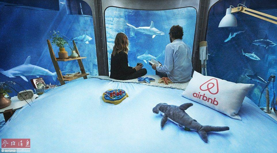 Passez une nuit au milieu des requins à l