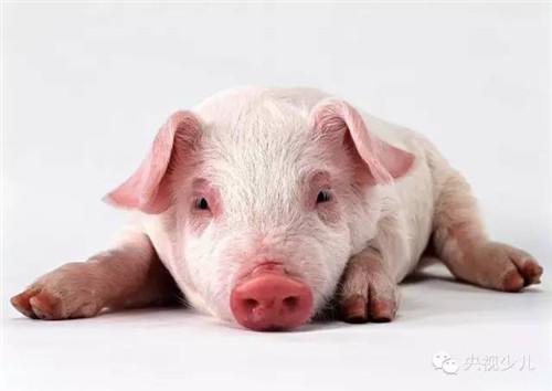 《动物好伙伴》的动物原型你都认识吗?