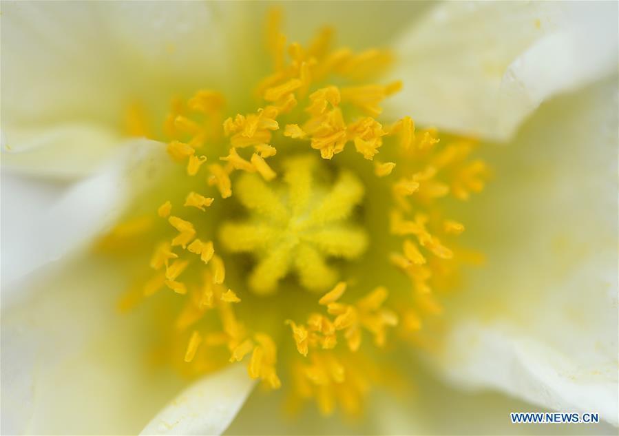 Beauté du printemps: Les fleurs sous l
