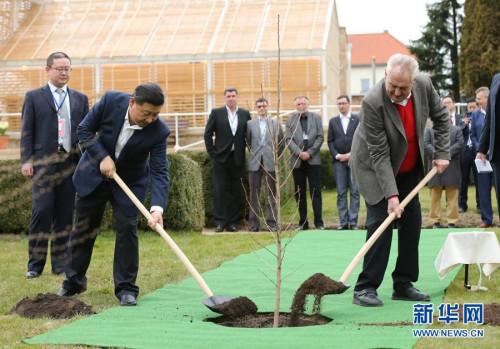 3月28日,两国元首在捷克总统的官邸庄园里种下一株来自中国的银杏树苗 图/新华网