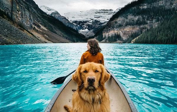 Voyager avec les animaux de compagnie va être plus facile