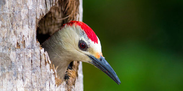 Découvrez des magnifiques images de la faune africaine comme vous n'en avez jamais vu