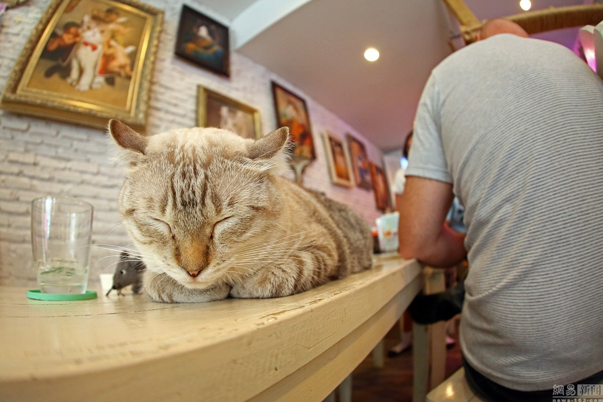 Caturday cafe bar à chat en plein Bangkok