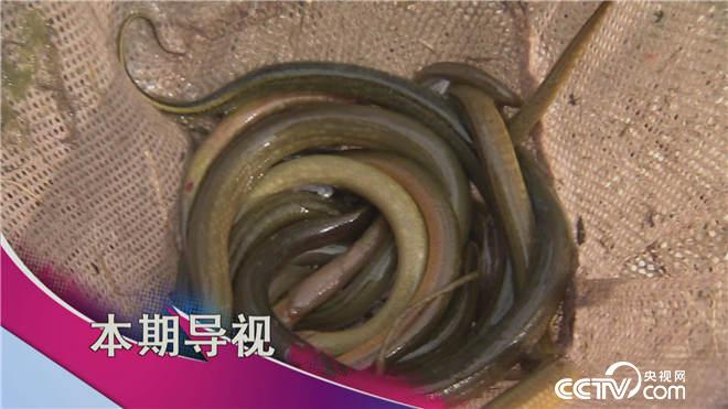 食尚大转盘看点:当美泥鳅遇到野黄鳝