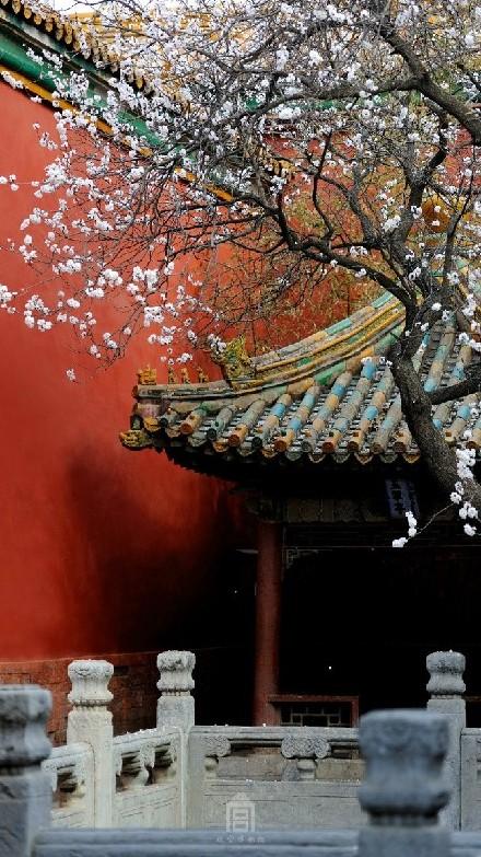 Photos : les couleurs du printemps dans l