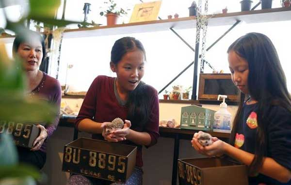 Hedgehog cafe opens in Tokyo