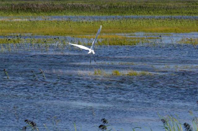 """Архив: Более 10 тысяч перелетных птиц вернулись в китайский природный заповедник """"Цисинхэ"""""""