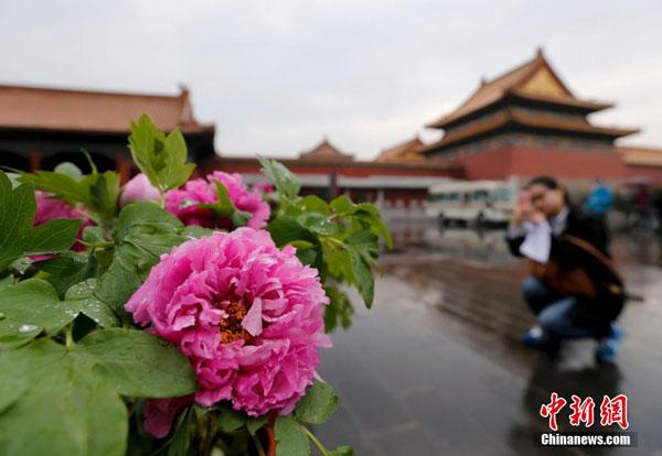 El Museo Palacio Imperial de Beijing acoge una exposición floral