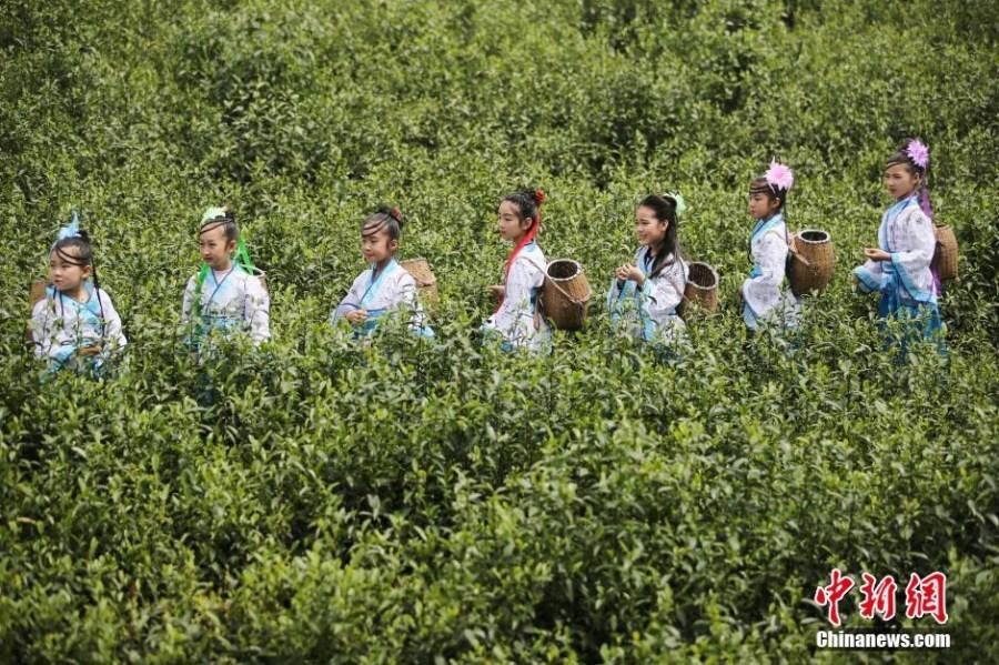 Envoyer [A A] Photos : des petites filles apprennent à cueillir les feuilles de thé au Jiangsu