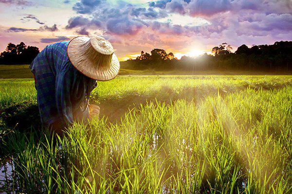 Архив:Опрос: почти половина китайских фермеров отказывается от идеи жизни в городе