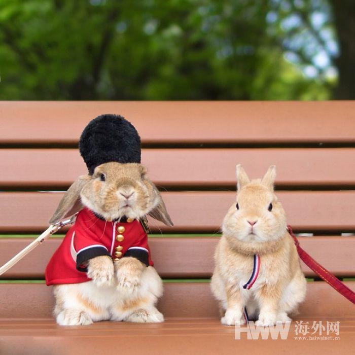 PuiPui, le lapin le plus élégant au monde !