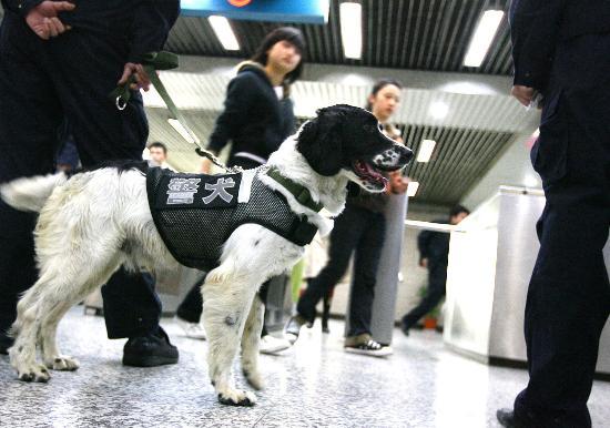 Архив: Собаки на страже