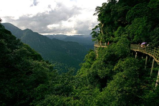 探秘那些人迹罕至的地方:井冈山次原始森林