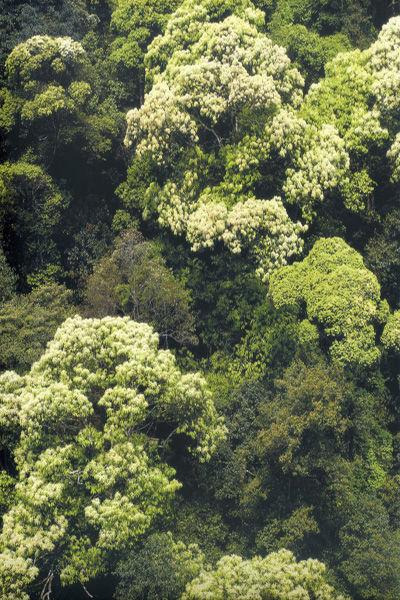 森林树木微信头像图片