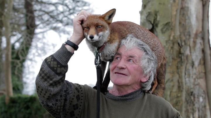Après avoir été secourus par cet homme, ces renards refusent de quitter leur sauveteur