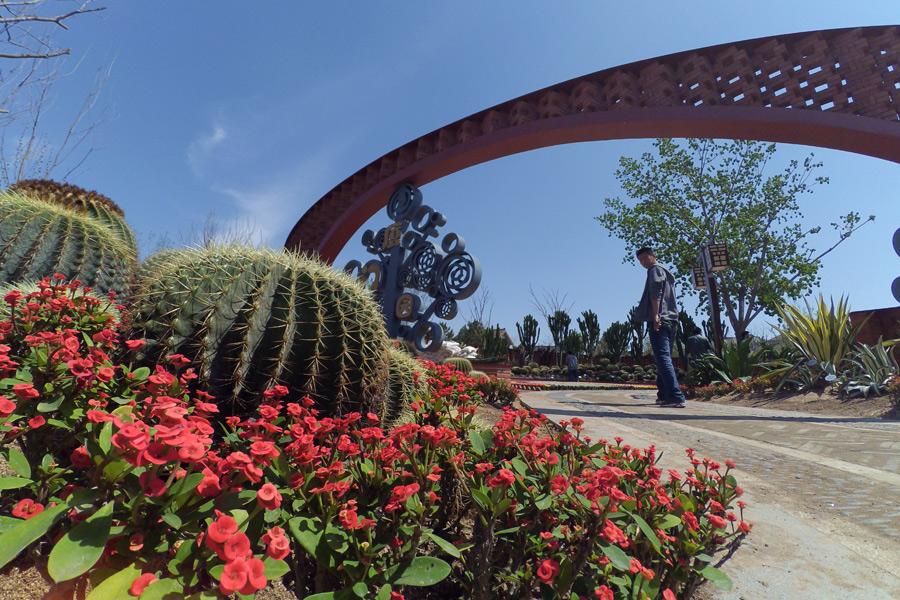 На выставке представлены десятки тысяч растений из разных стран