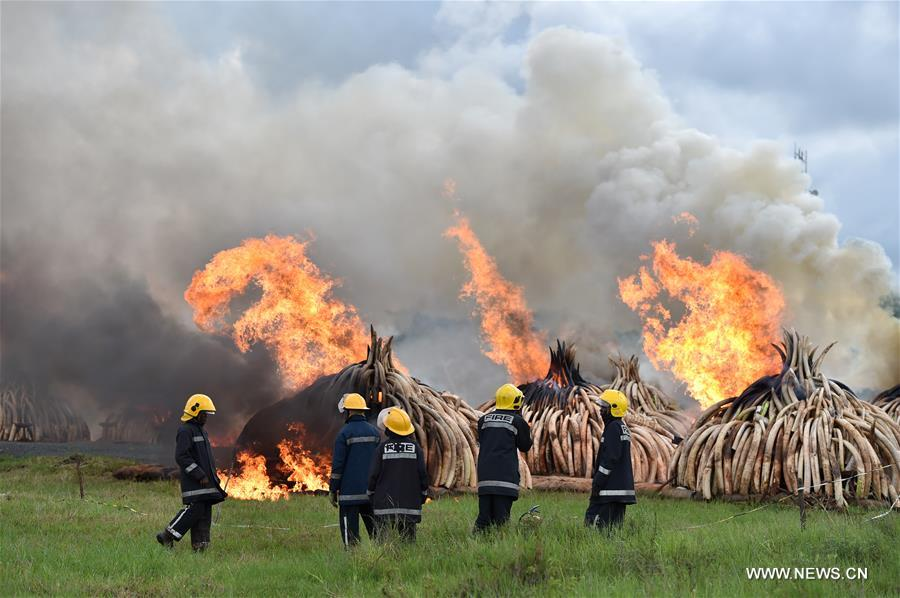 NAIROBI, April 30, 2016(Xinhua)-- Fire fighters watch the fire at the site of burning ivory and rhino horn in Nairobi, Kenya, on April 30, 2016. Kenya on Saturday torched at least 105 tons of ivory and 1.3 tons of rhino horn to reinforce Kenya