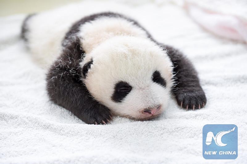 Le travail le plus satisfaisant peut être ... avec des pandas