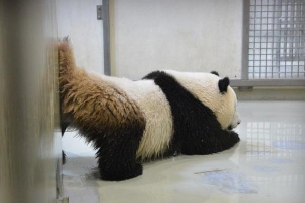 图片来源于台湾联合新闻网