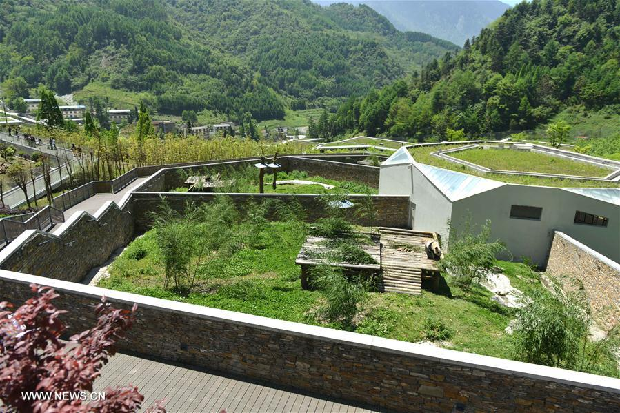 Photo taken on May 11,2016 shows enclosures for giant pandas at the Shenshuping protection base under the China Conservation and Research Center for the Giant Panda in the Wolong National Nature Reserve, southwest China