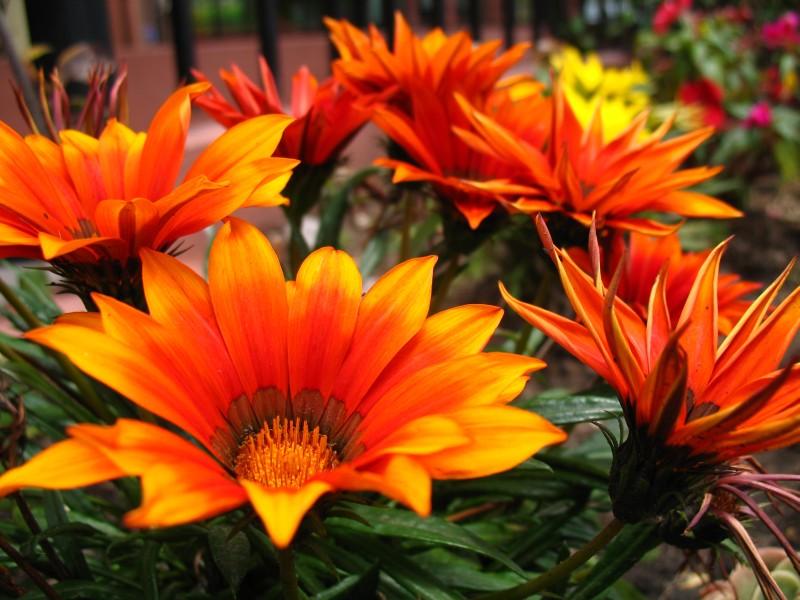 la importación de flores en China ha tenido un gran crecimiento