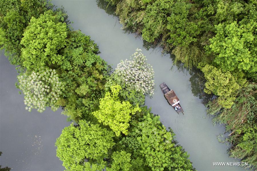 HANGZHOU, 25 mai (Xinhua) -- Photo des zones humides du lac de l