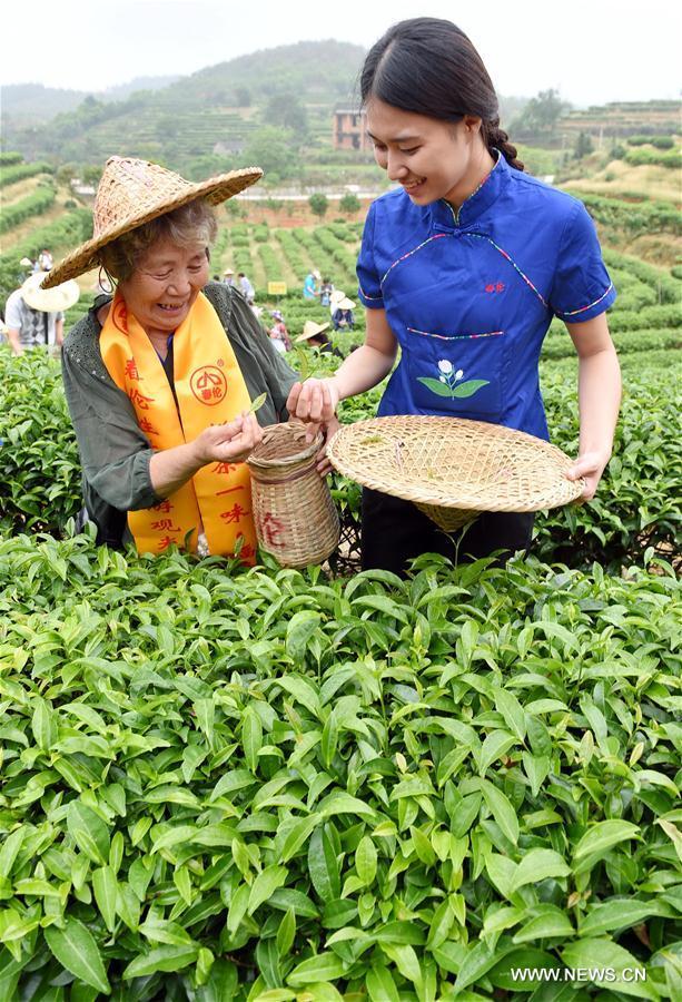 Чайные плантации в Фуцзяни ждут туристов