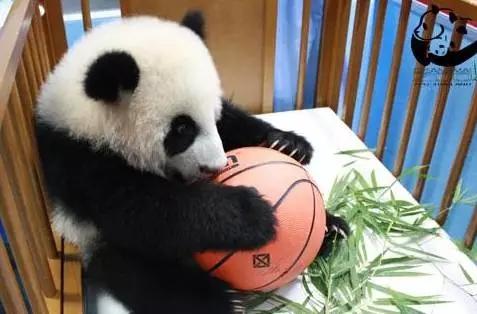 我有一个篮球(ง•̀_•́)ง