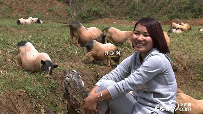 致富经:香猪把女孩逼回家 5月31日