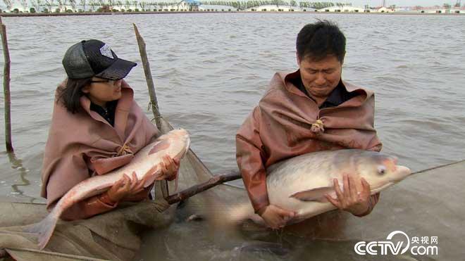 致富经养鱼视频全集
