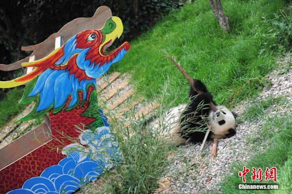 大熊猫被龙舟玩具和竹笋所吸引