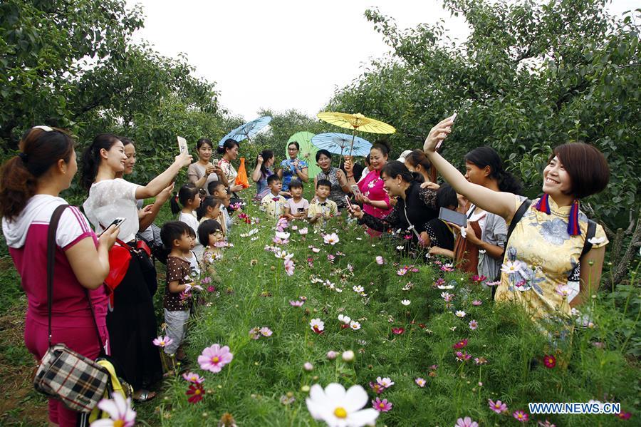 Des gens visitent un verger de poirier à Tengzhou, dans la province du Shandong (est de la Chine), le 10 juin 2016. Les Chinois ont joui des vacances de trois jours de la Fête des bateaux-dragons de différentes façons. (Xinhua/Song Haicun)