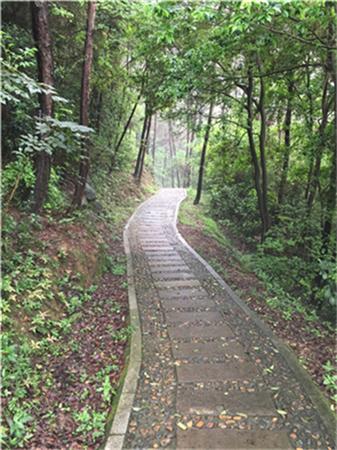 雨后的林间小路空气清新,地上满是落叶,小径两旁是绿茵茵的大树.