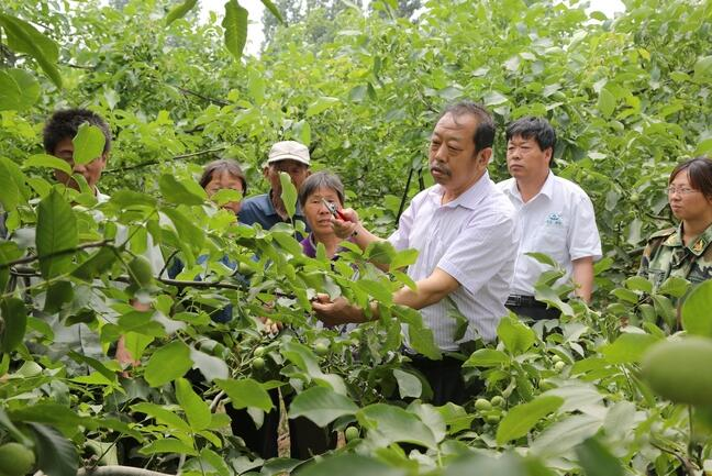 李保国在田间为农户讲解核桃栽培实用技术