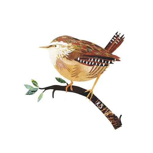 壁纸 动物 鸟 鸟类 雀 500_500