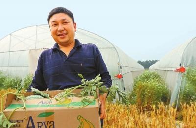 民权县李建华留转土地100亩,种植绿色无公害品种西瓜。⑨2马玉摄